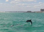 destin dolphin cruise